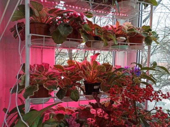 Фитолампа для растений и рассады