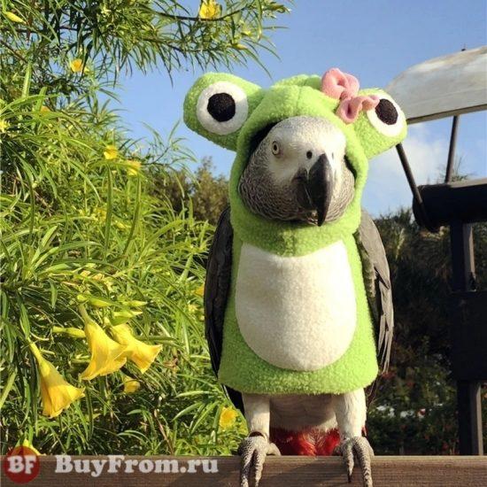 Костюм для попугая Алиэкспресс