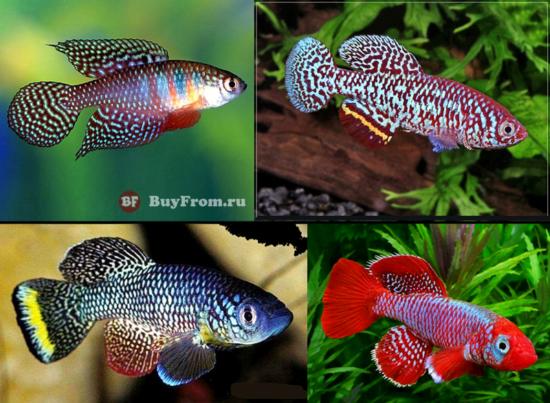 Живые аквариумные рыбки (икра рыбок) АлиЭкспресс